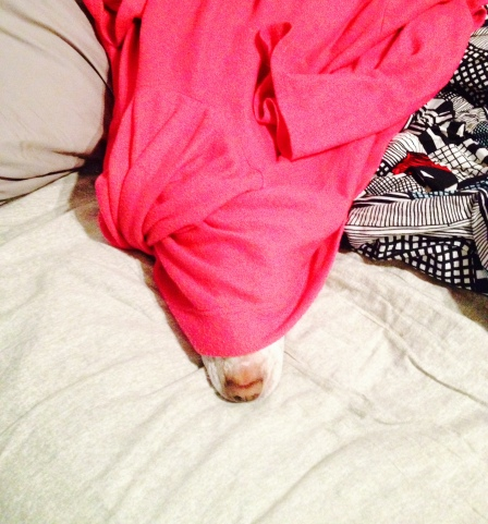 """Markley sleeping under my Snuggie. """"Sorry dawg, Mom and Dad are too cheap to turn on the heat!"""""""